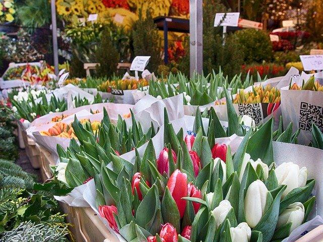 tulips-1904200_640.jpg
