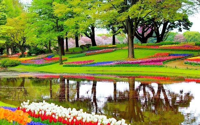 garden-1093681_640.jpg